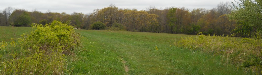 View of the field next to the Trustees Farmstead at Moose Hill in Sharon.