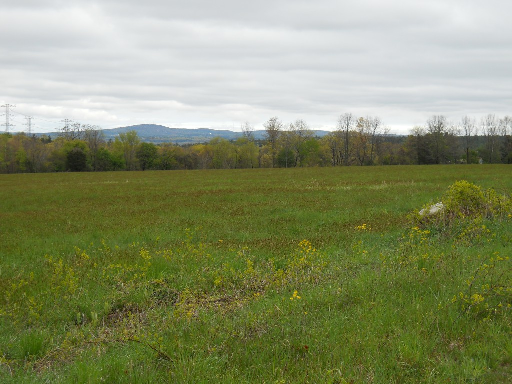 View of Great Blue Hill from Moose Hill Reservation field.
