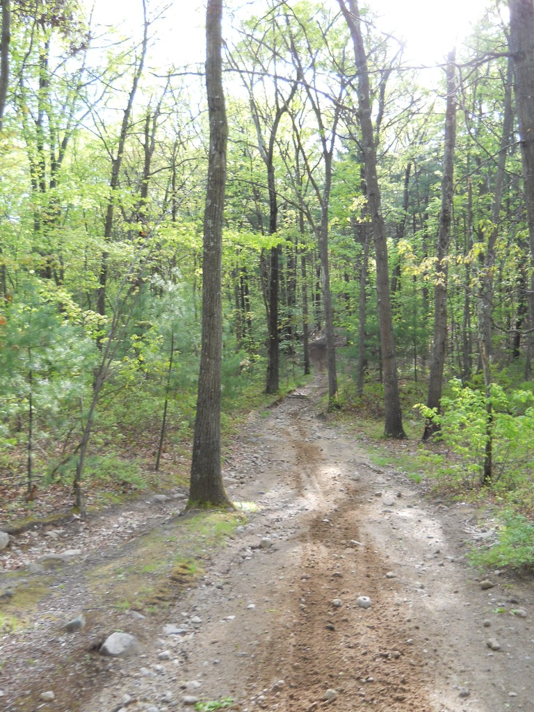 Multi-use trail at Wrentham State Forest