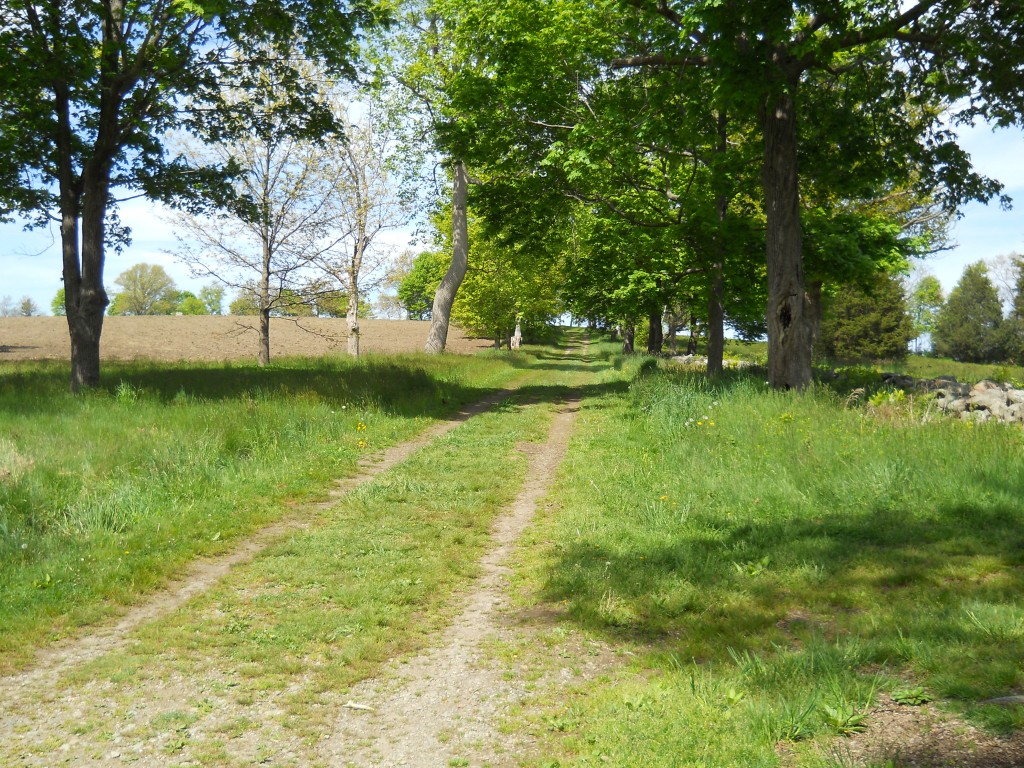 Typical path at World's End in Hingham, MA