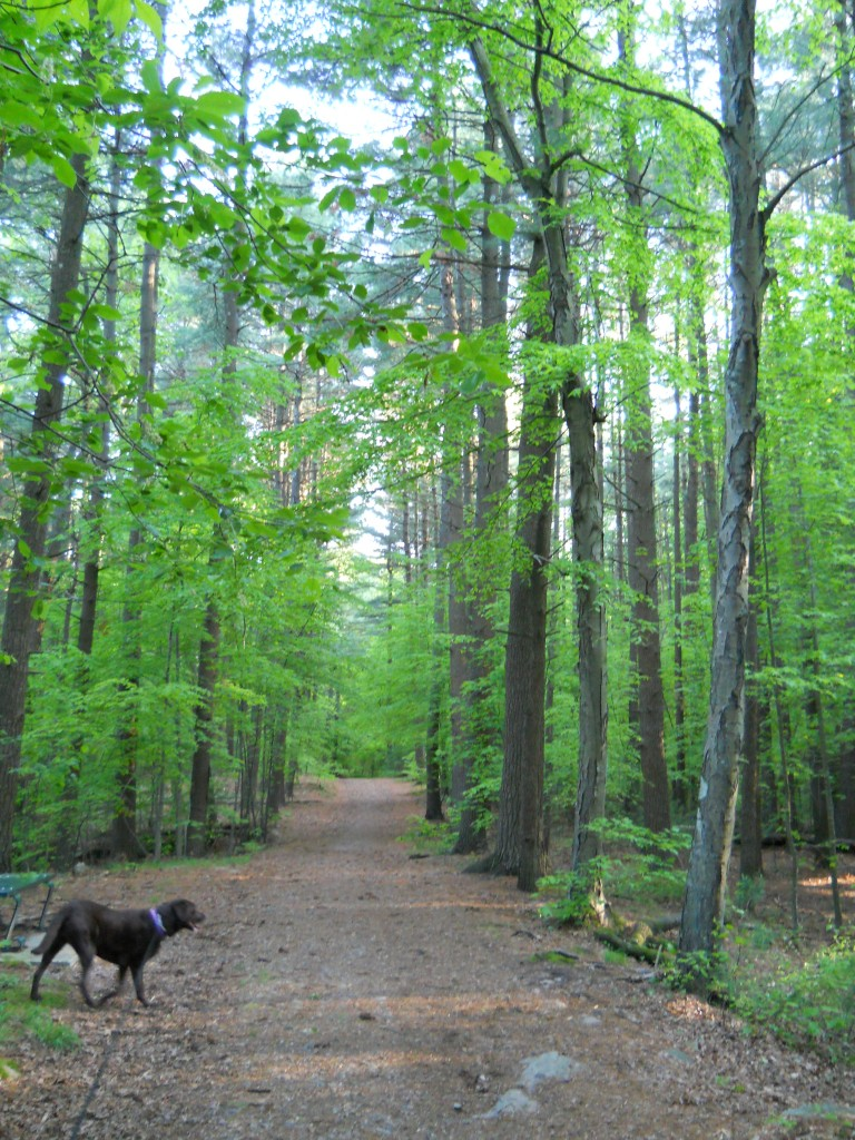 Hiking trail at Wilson Mountain State Reservation