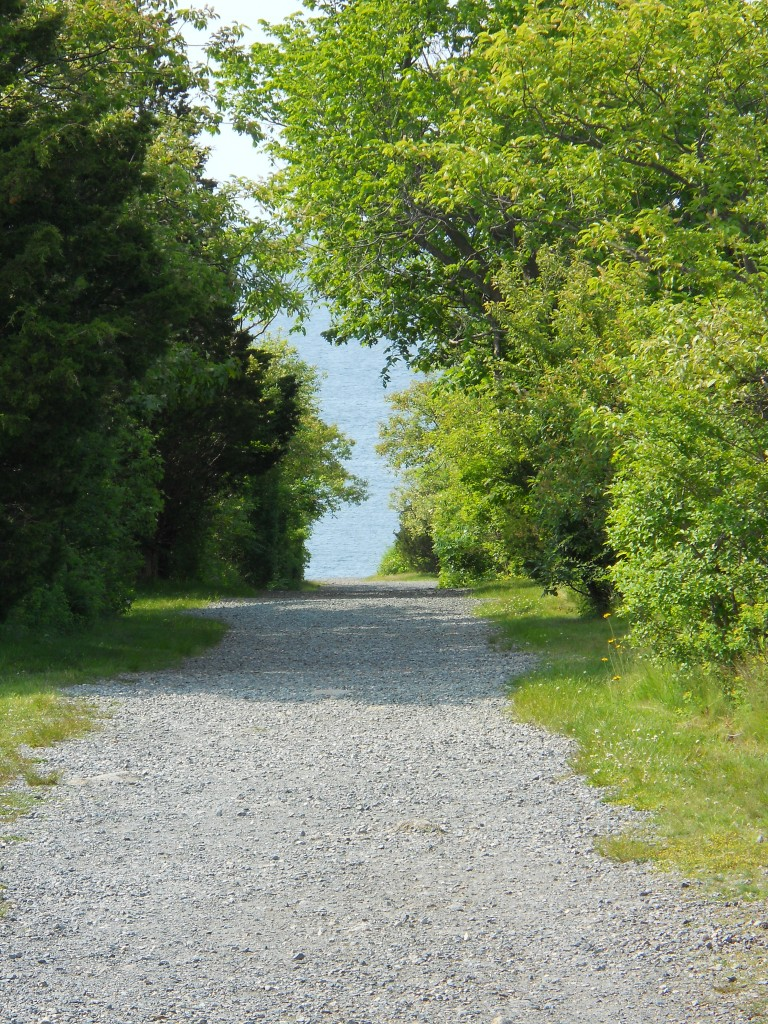 Trail at Halibut Point State Park