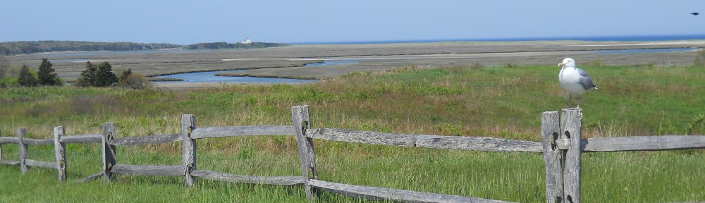View from Fort Hill Parking area at the Cape Cod National Seashore