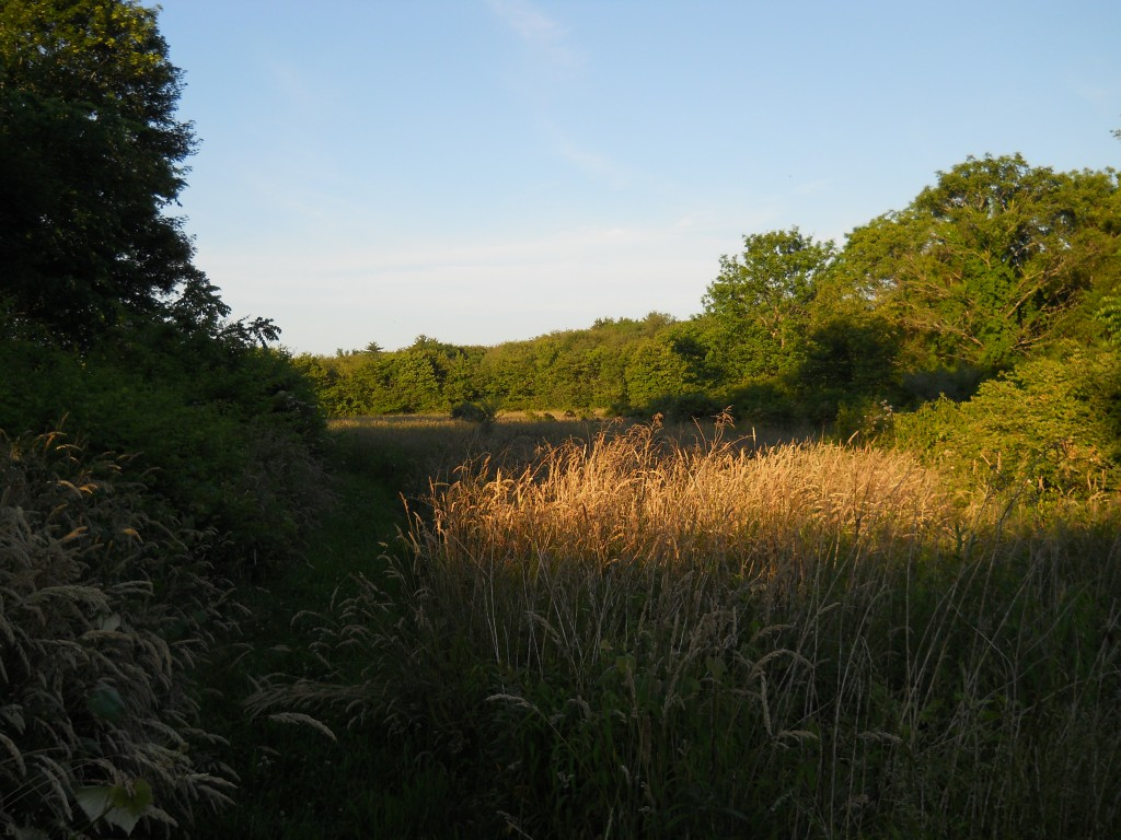 Trail through a meadow at the Westville Conservation Area