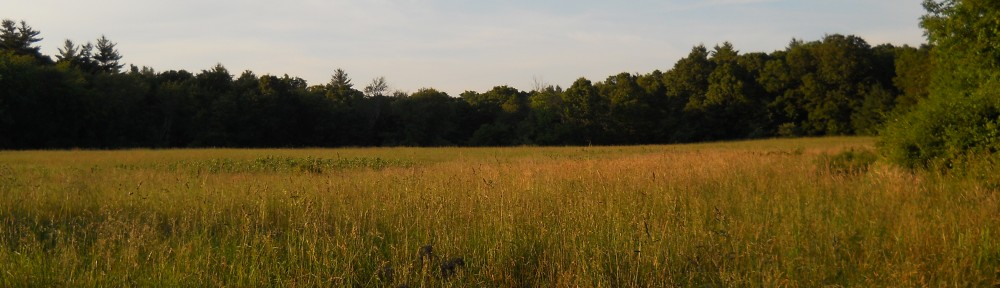 Westville Conservation Area Meadow