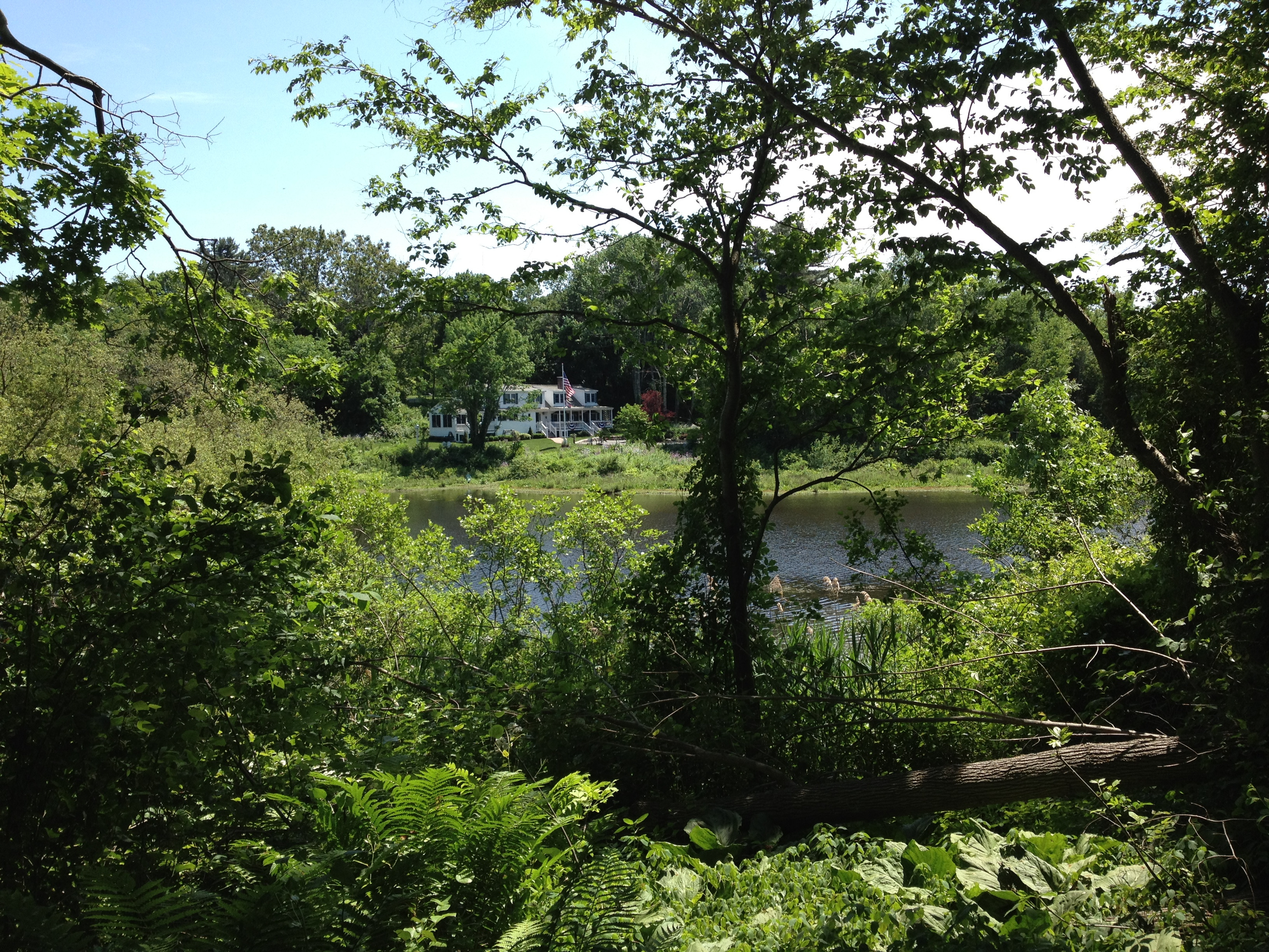 View across Plimpton Pond from the Endean Path in Walpole, MA