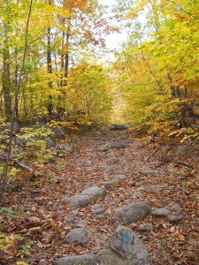 Trail with fall foliage at Pleasant Mountain.