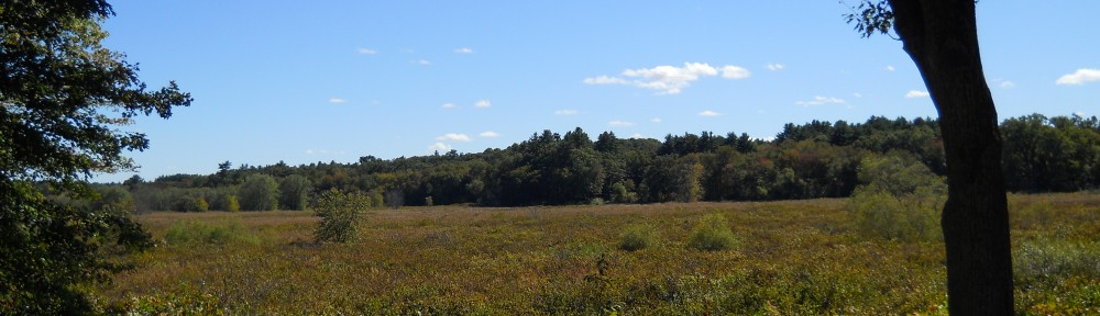Sudbury River Wetlands