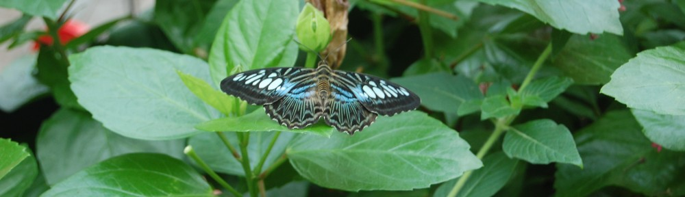 Butterfly at the The Butterfly Place