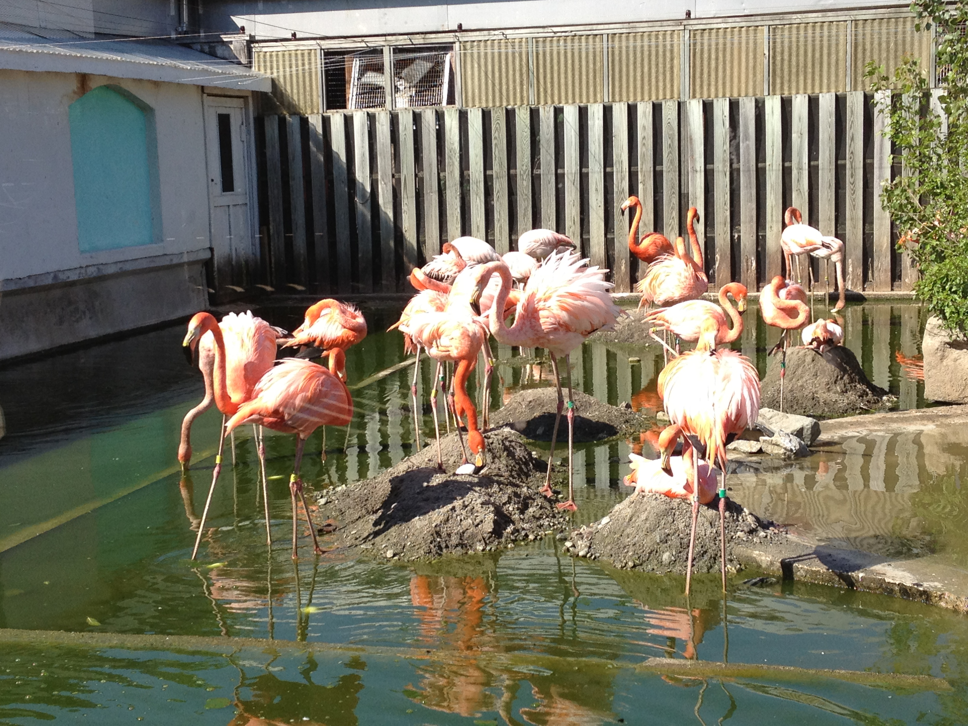 Flamingo Tank at Stone Zoo