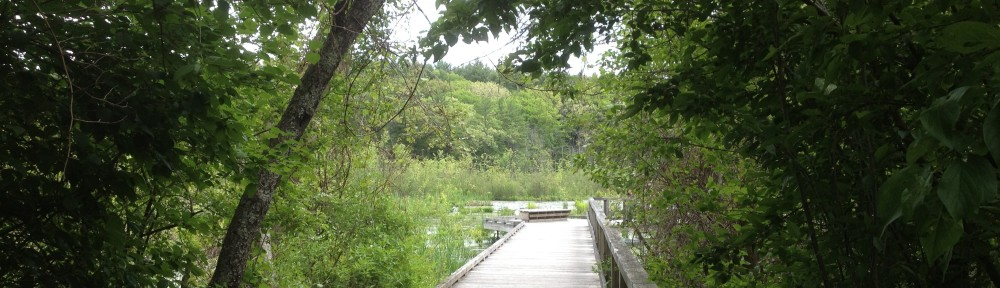 Boardwalk onto the swamp at Broadmoor.