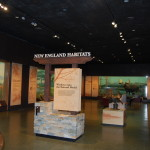 New England Habitat Exhibit at the MOS.