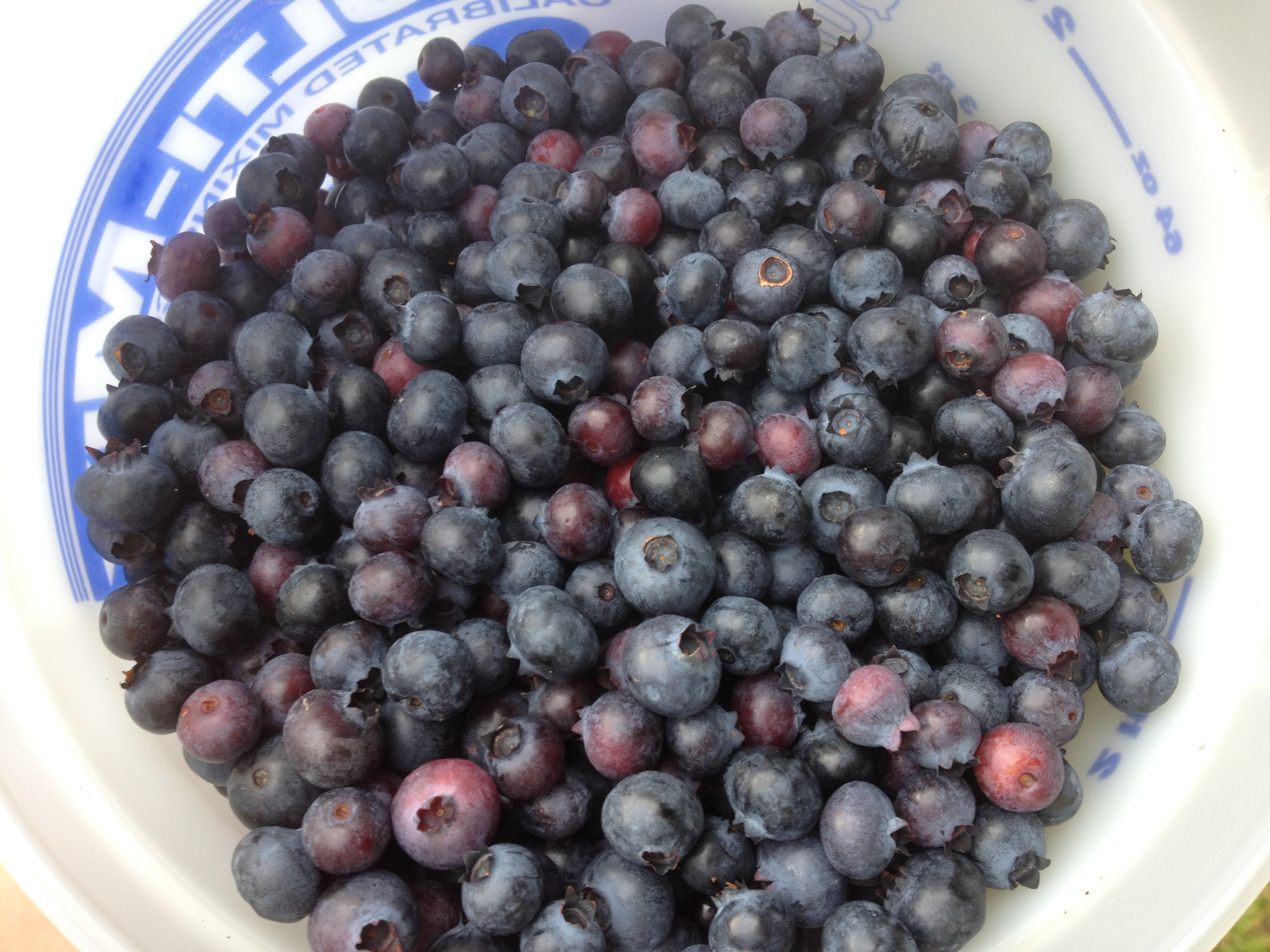 Blueberries from Triple Trouble Farmq